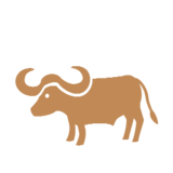 Water Buffalo on Microsoft Windows 8.1