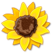 Sunflower on Samsung Experience 8.1