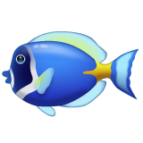Tropical Fish on WhatsApp 2.19.244