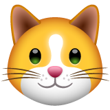 Cat Face on WhatsApp 2.19.352