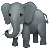 Elephant on WhatsApp 2.19.352