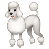 Poodle on WhatsApp 2.20.206.24